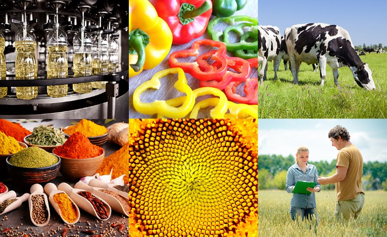 Consultant Recruitment & Selection - Food and Agri